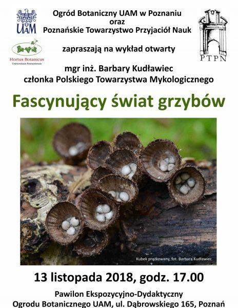 Fascynujący świat grzybów.
